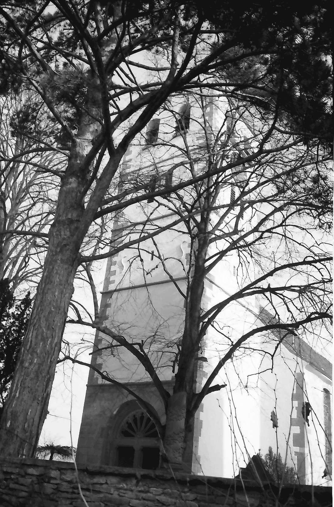 Betberg: Evangelische Kirche nach der Renovierung; Turm; außen durch Äste, Bild 2