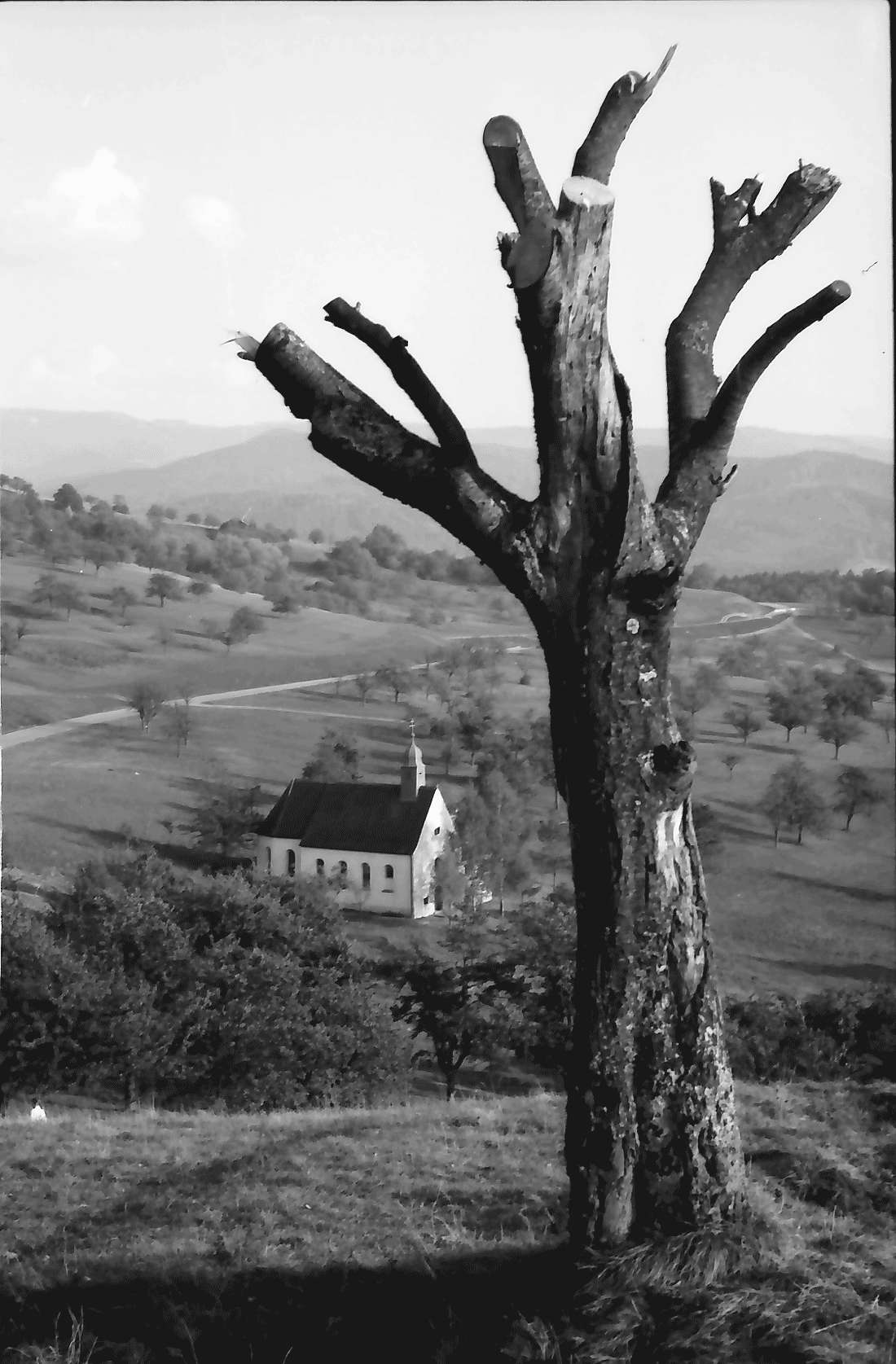 Ebringen: Berghausener Kapelle von oben; Vordergrund Baumstumpf, Bild 2
