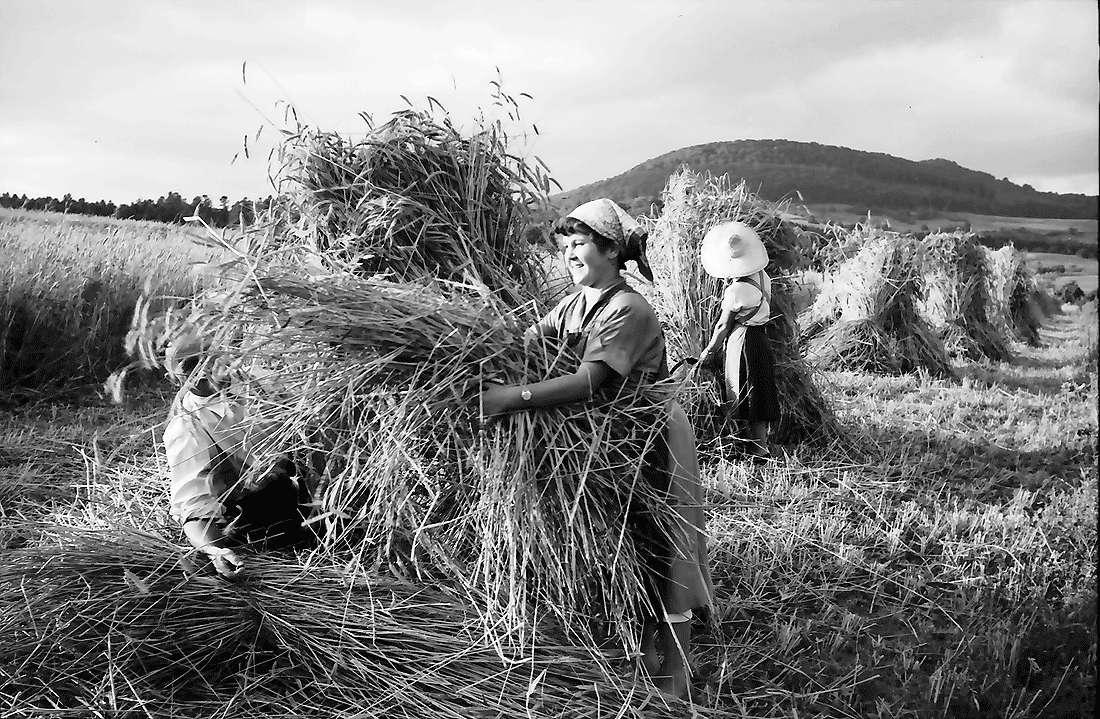 Bollschweil: Bauern beim Getreidebündeln; Hintergrund Schönberg