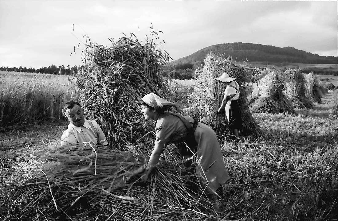 Bollschweil: Bauern beim [Getreide]bündeln; Hintergrund Schönberg, Bild 1