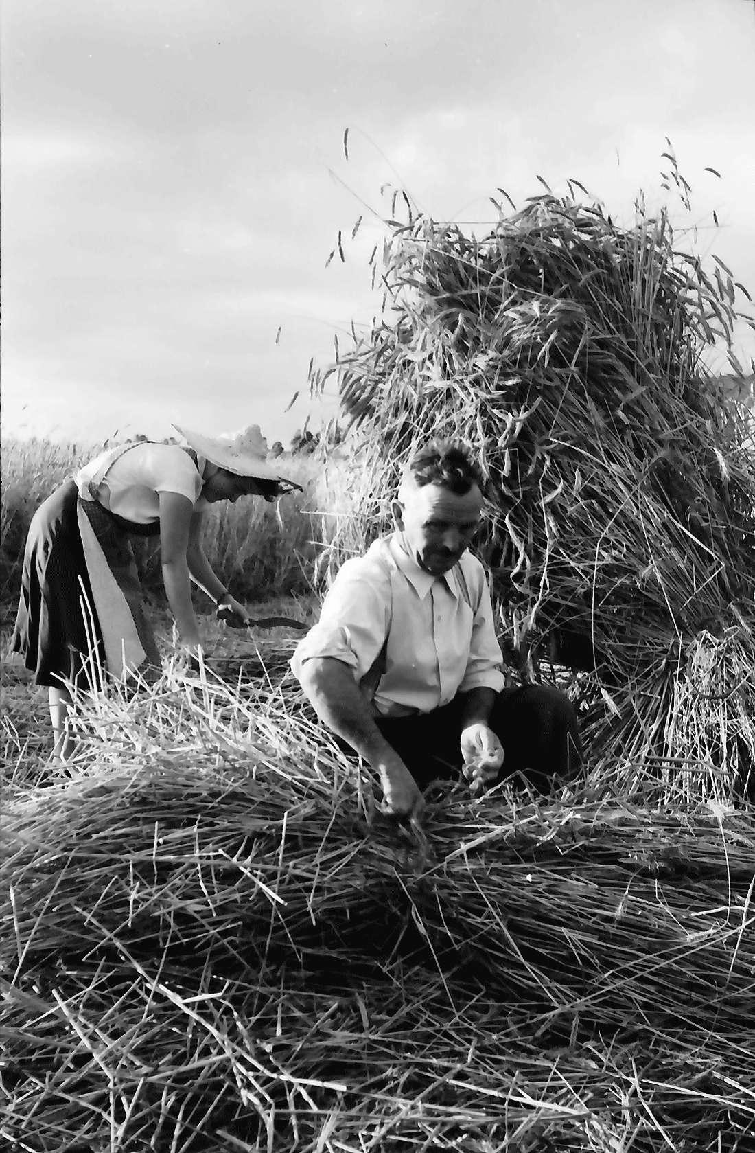 Bollschweil: Bauern beim [Getreide]bündeln; Hintergrund Schönberg, Bild 2