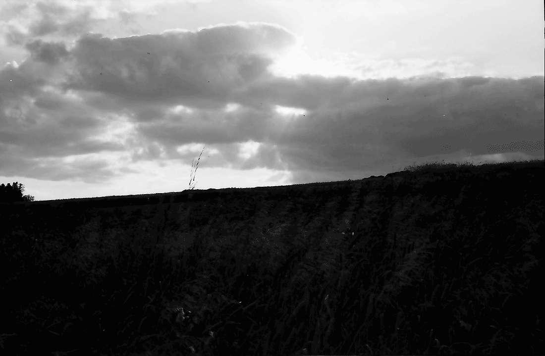 Bollschweil: Kornfeld mit Wolken, Bild 2