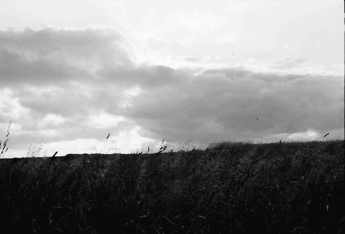 Bollschweil: Kornfeld mit Wolken, Bild 1