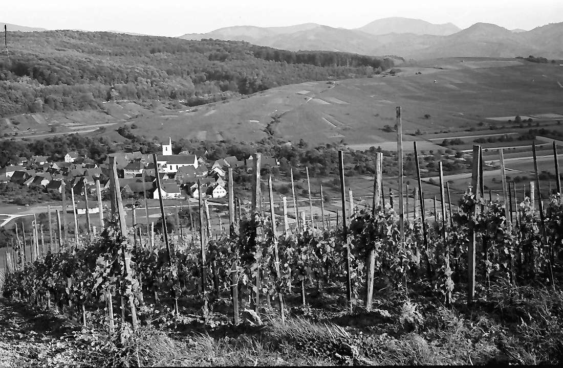 Batzenberg: Vom Batzenberg auf Pfaffenweiler, Bild 1