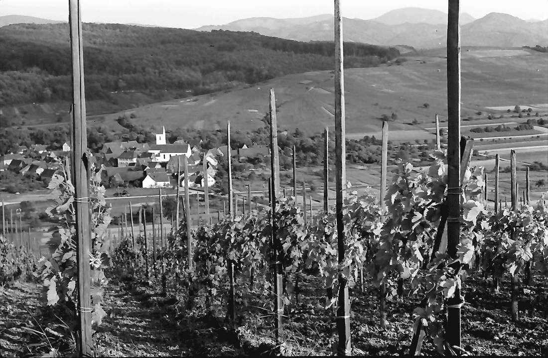 Batzenberg: Vom Batzenberg auf Pfaffenweiler, Bild 2