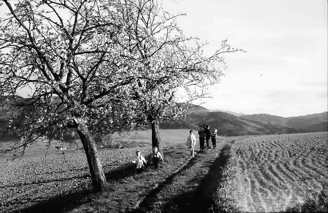 Au: Zwei Kirschblütenbäume am Rain; mit Kindern, Bild 1