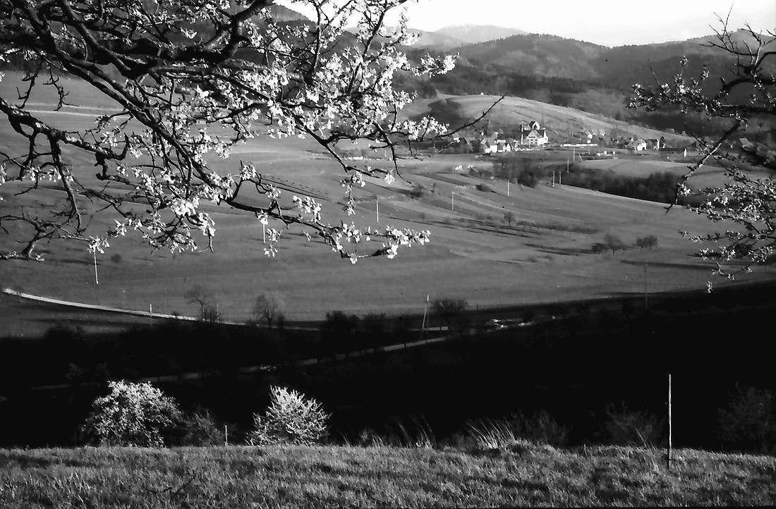 Wittnau: Blick gegen Sölden vom Hang des Schönbergs mit Blütenzweigen, Bild 1