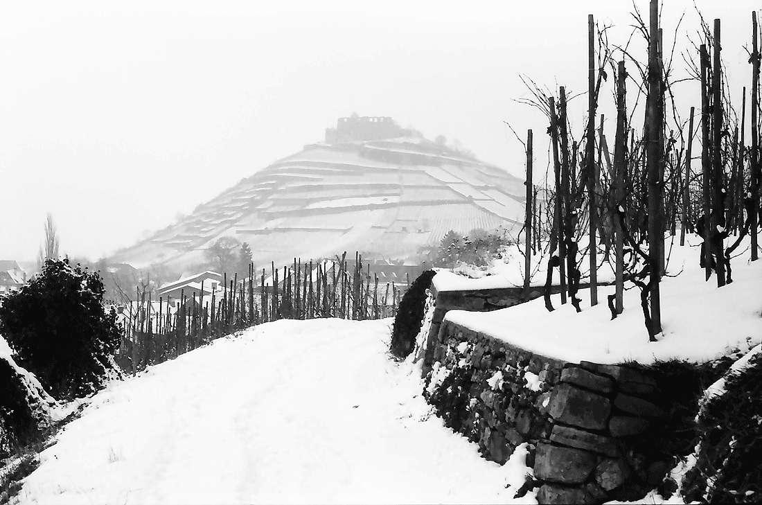 Staufen: Weinbergweg mit Burg im Schnee, Bild 2