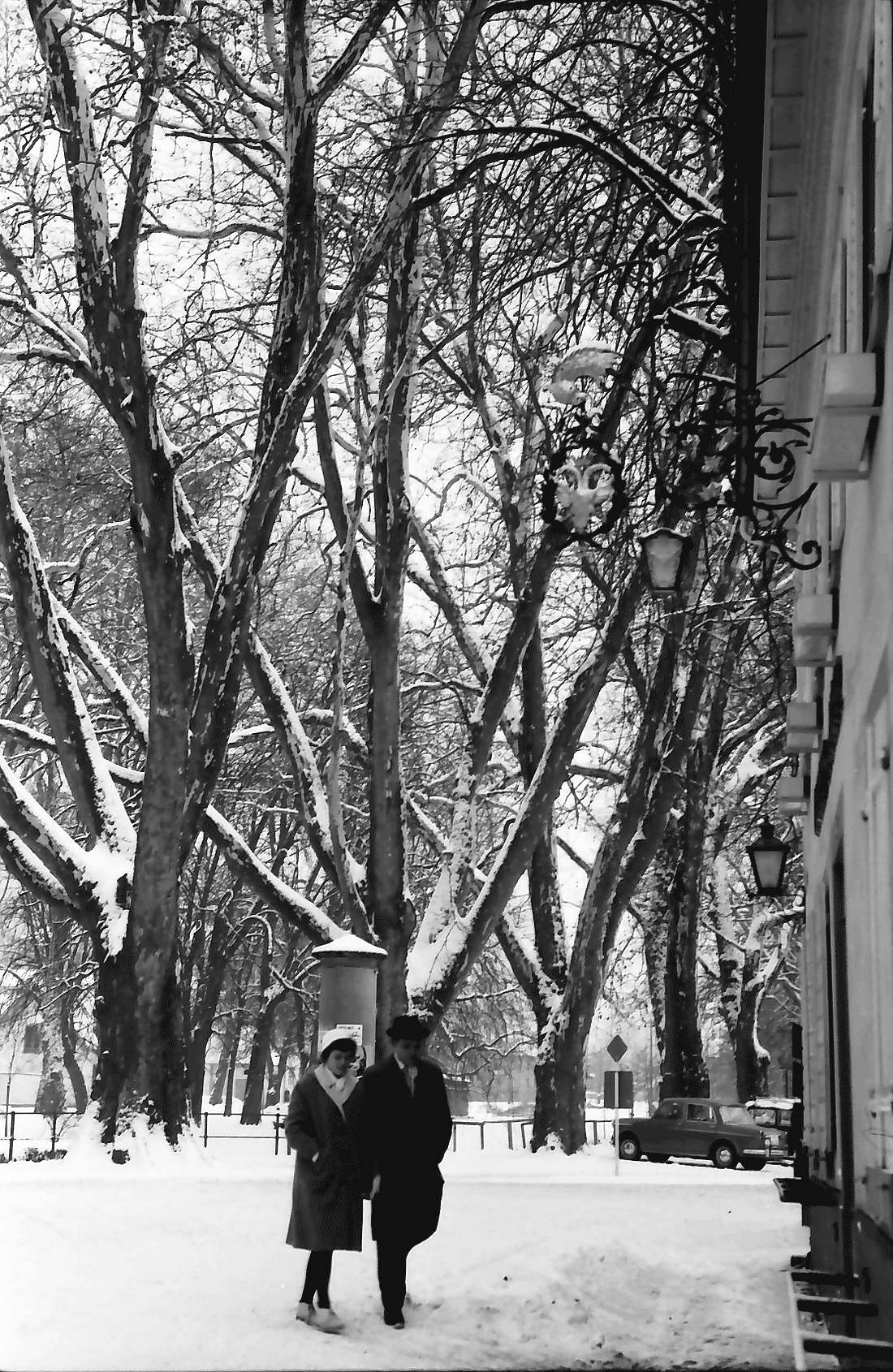 Staufen: Verschneite Platanen am Neumagen, Bild 2