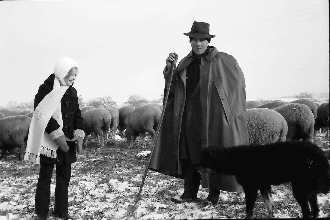 Staufen: Schafherde im beschneiten Feld bei Staufen; Hirte mit Hund und Daniela, Bild 2