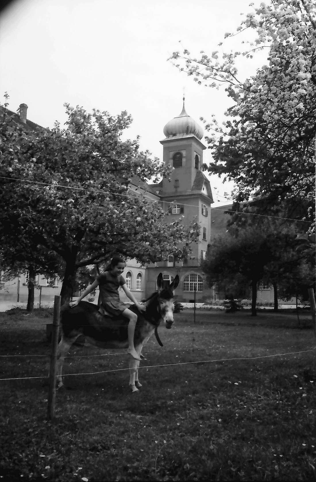 Heitersheim: Esel im Hof, Bild 1