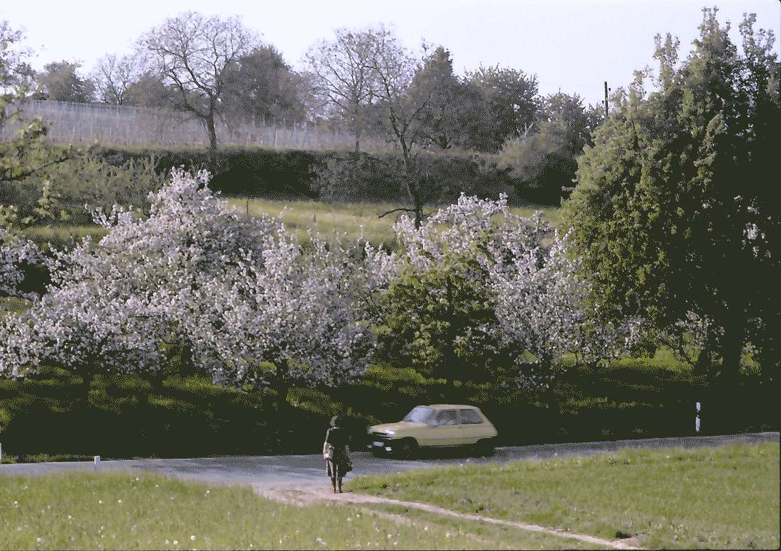 Zunzingen: Blütenlandschaft, Bild 1