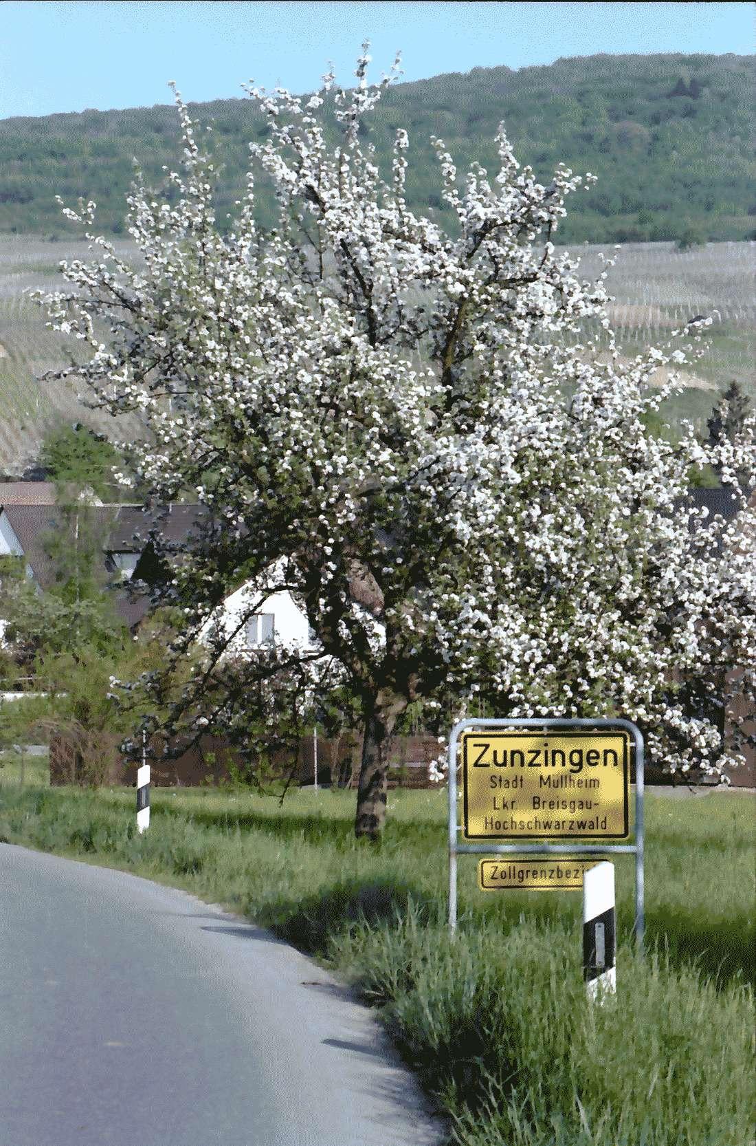 Zunzingen: Straße mit Ortsschild, Bild 1