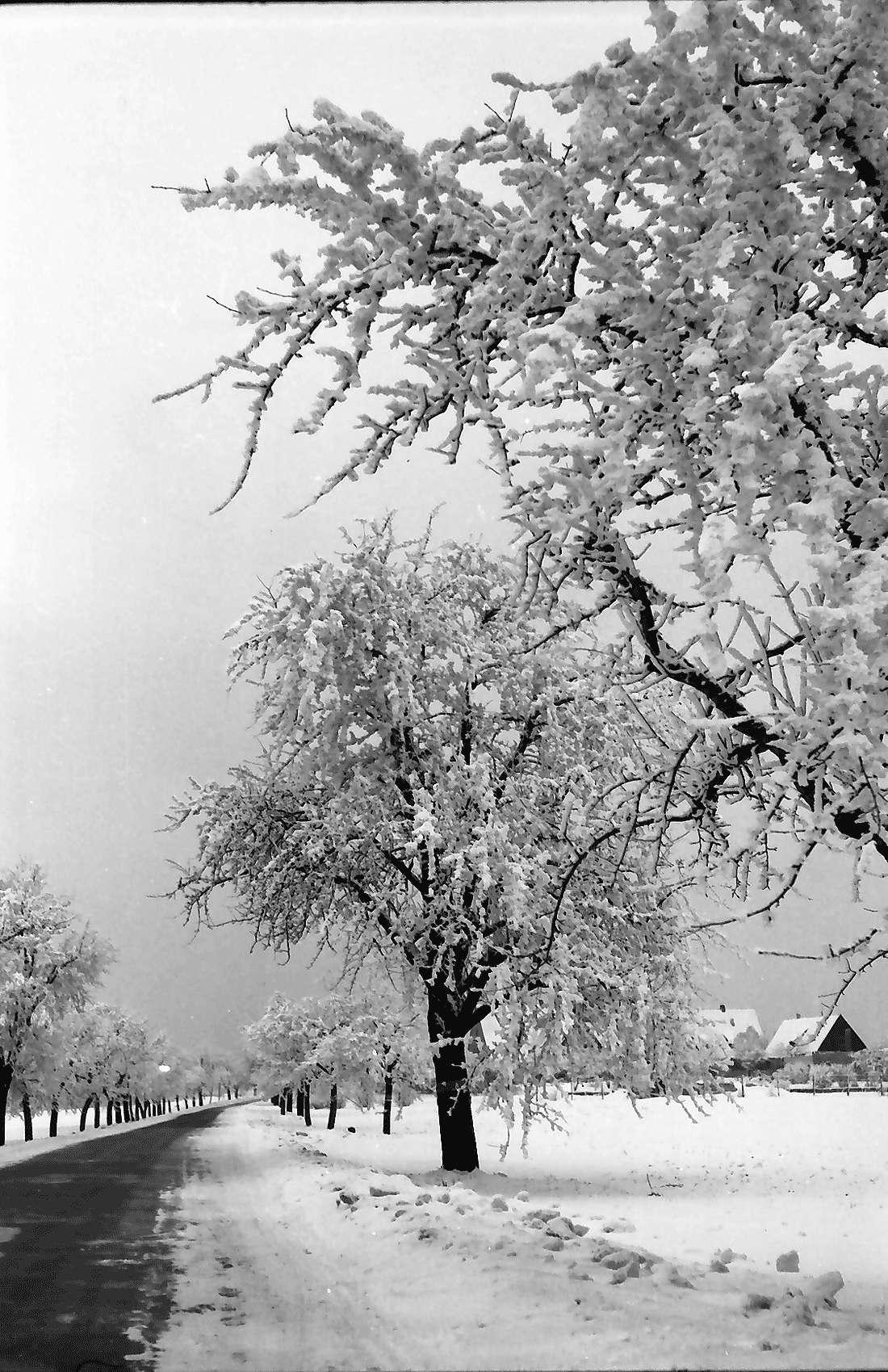 Tuttlingen: Straße mit bereiften Bäumen bei Tuttlingen, Bild 2