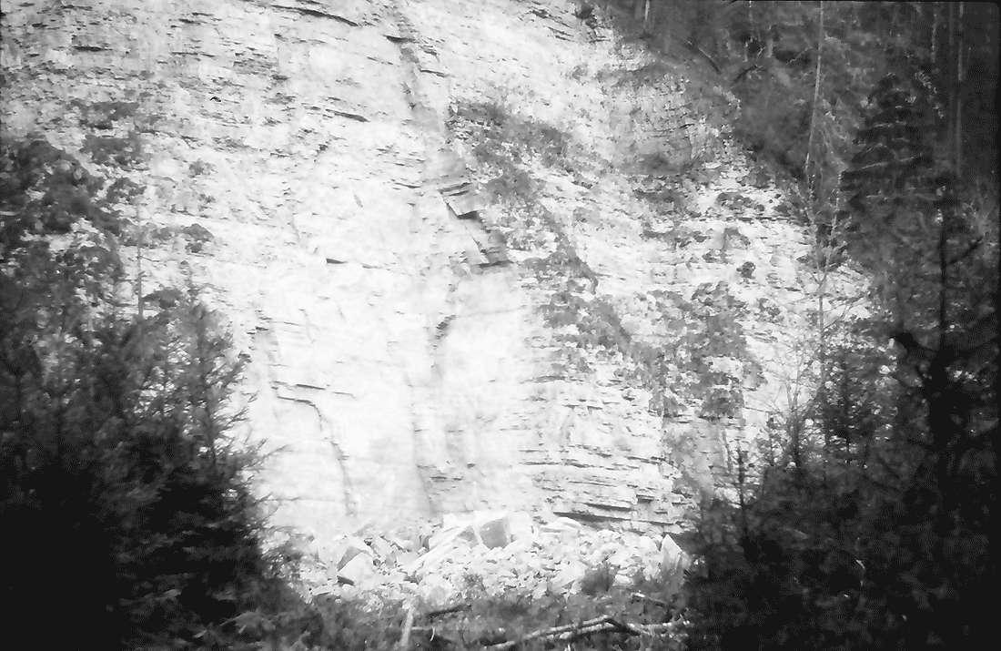 Münchingen: Felssturzkatastrophe am Rümmelefelsen; Bruchstelle mit niedergewalztem Wald, Bild 1