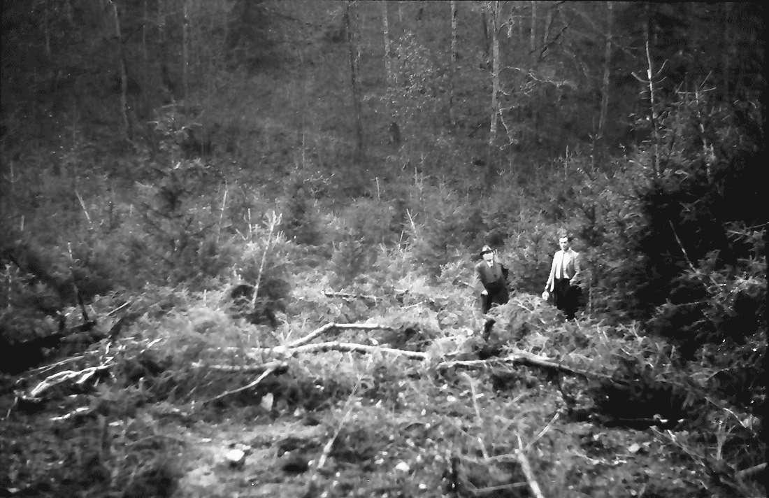 Münchingen: Felssturzkatastrophe am Rümmelefelsen; der niedergewalzte Wald, Bild 1