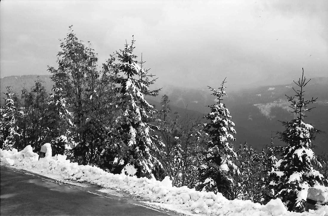 Hornisgrinde: Schwarzwaldhochstraße im Schnee; verschneite Bäume, Bild 1