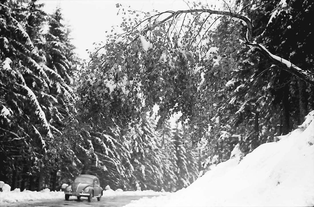Hornisgrinde: Verschneite Birke beugt sich über die Straße; mit Auto, Bild 1