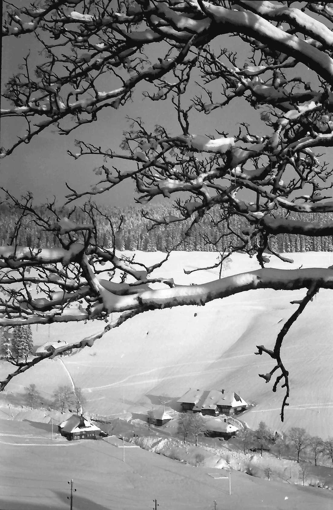 Todtnauberg: Hof im Ortsteil Rütte; mit verschneiten Ästen im Vordergrund, Bild 1