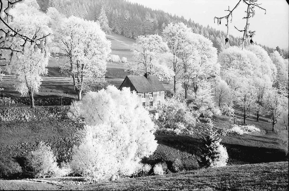 Saig: Raureiflandschaft mit Haus, Bild 2