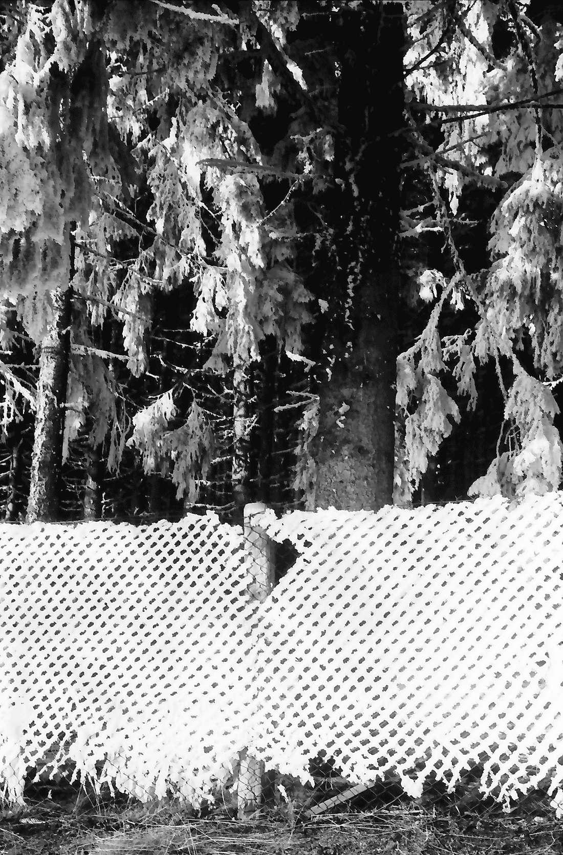 Saig: Drahtzaun im Raureif, Bild 1