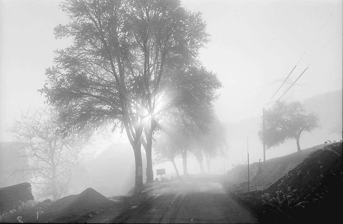 Saig: Straße im Nebel, Bild 1