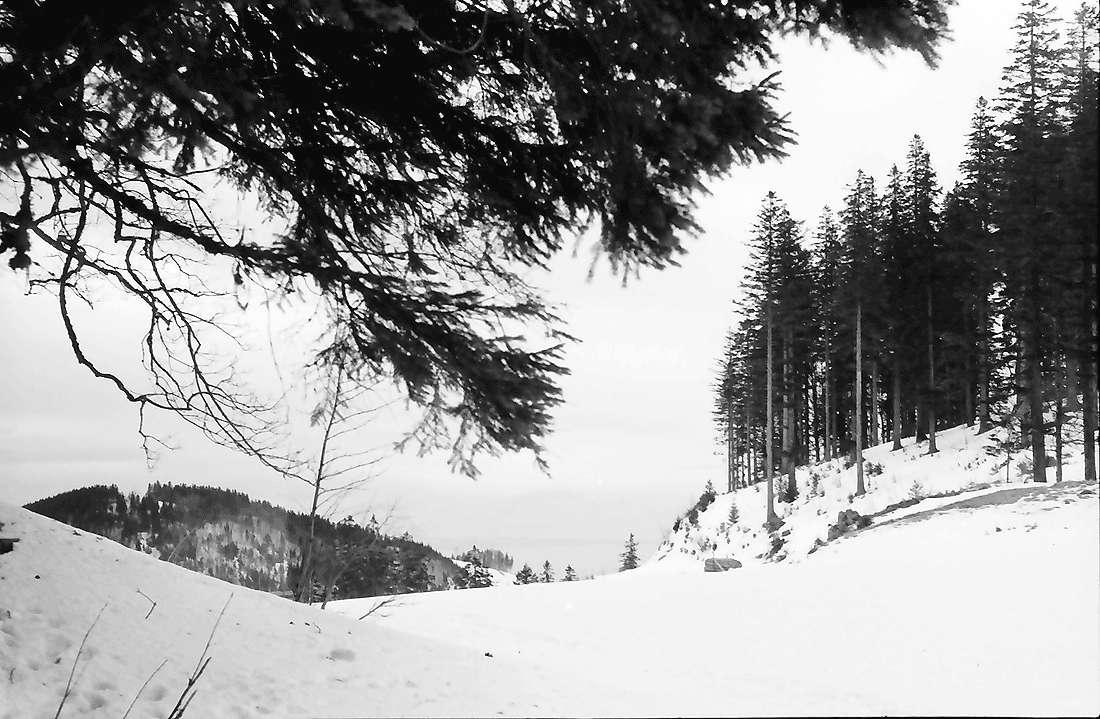 Rinken: Oberer Ausgang des Zastlertals; im Schnee; Vordergrund Tanne, Bild 1