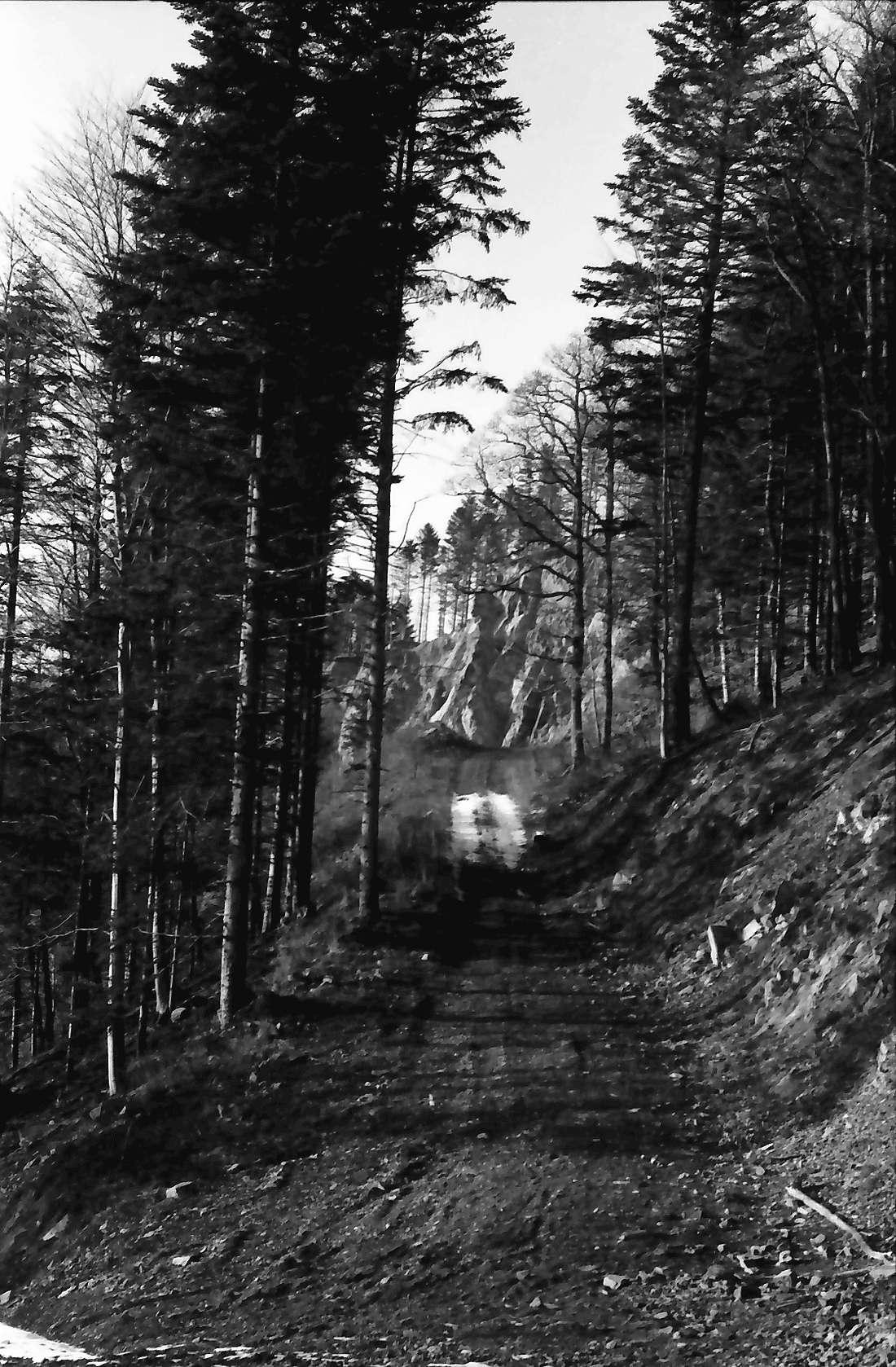 Wagensteig: Waldweg zum Steinbruch; Griesdobel, Bild 1