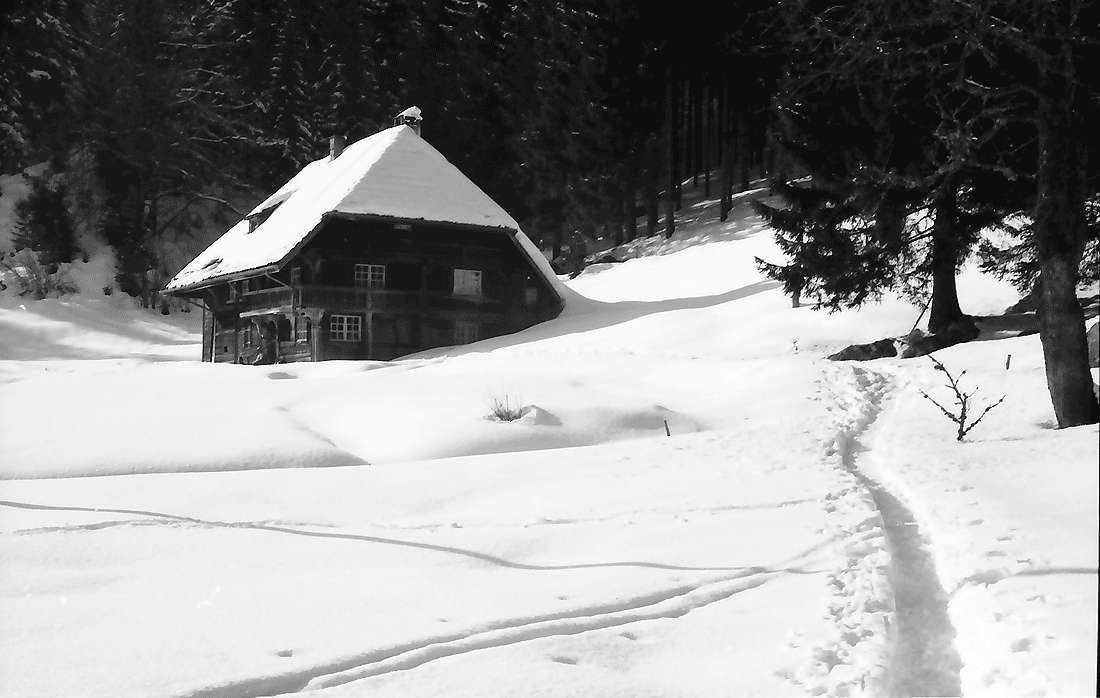 Hinterzarten: Haus am Wald, Bild 2
