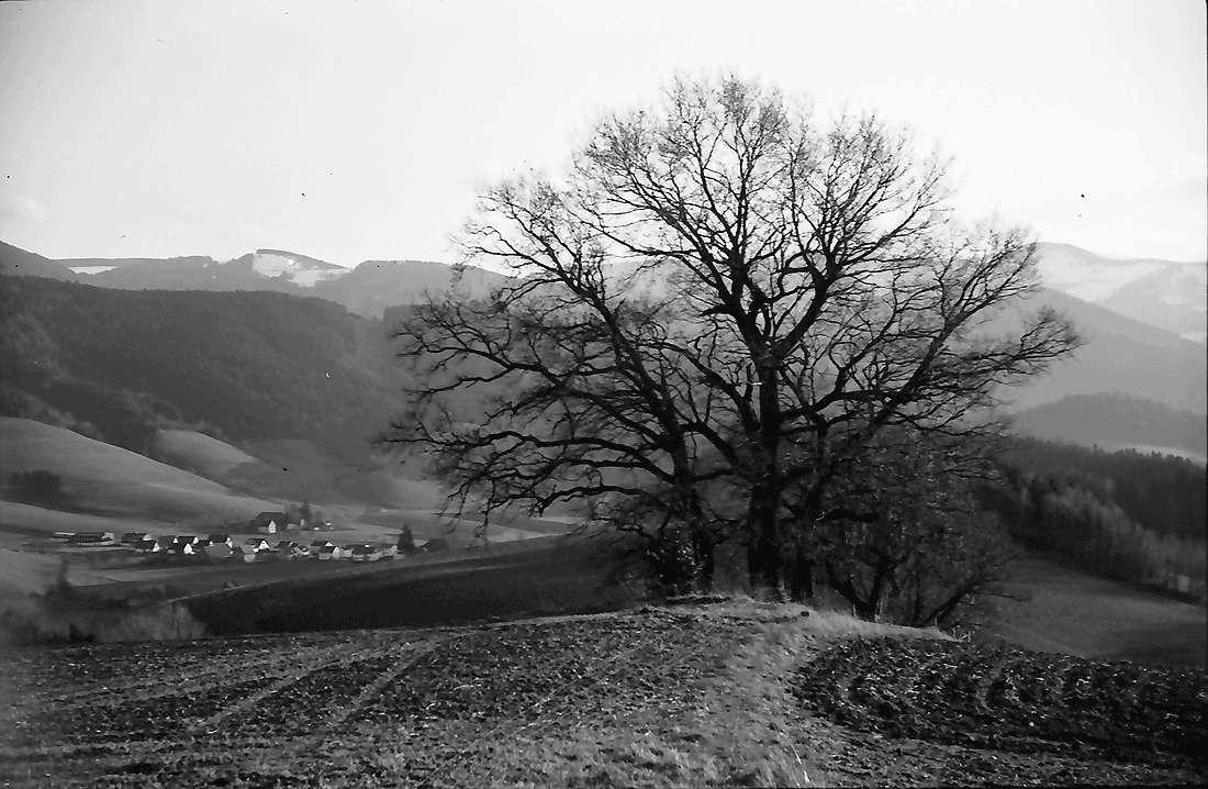 Stegen, Rechtenbach: Kahler Baum mit Blickrichtung ins Dreisamtal, Bild 1