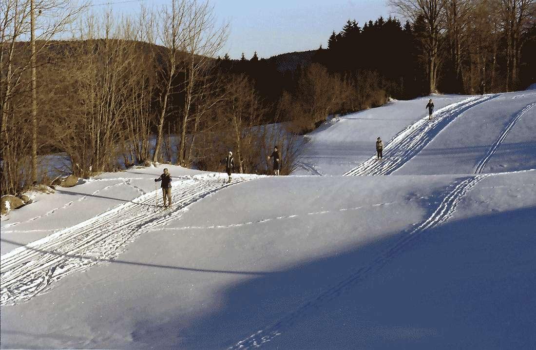 Hinterzarten: Gruppe Skifahrer auf der Loipe, Bild 1