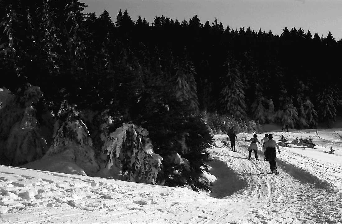 Schauinsland Wintersportszenen Auf Der Halde Hofsgrund Detailseite