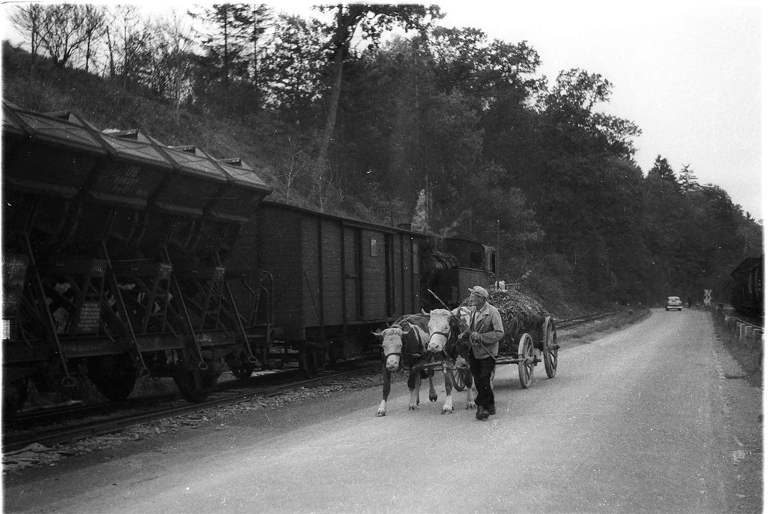 "Stetten bei Haigerloch, Lok 16, Kuhfuhrwerk von Sebastian Lachenmaier (1902 - 1982), vulgo ""Waibel-Baschte"", Schachter, Bild 1"
