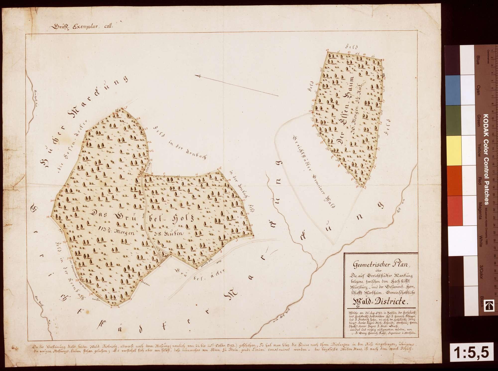 Geometrischer Plan der gemeinschaftlichen würzburgisch-wertheimischen Walddistrikte auf Gerichtstetter Gemarkung, Bild 1