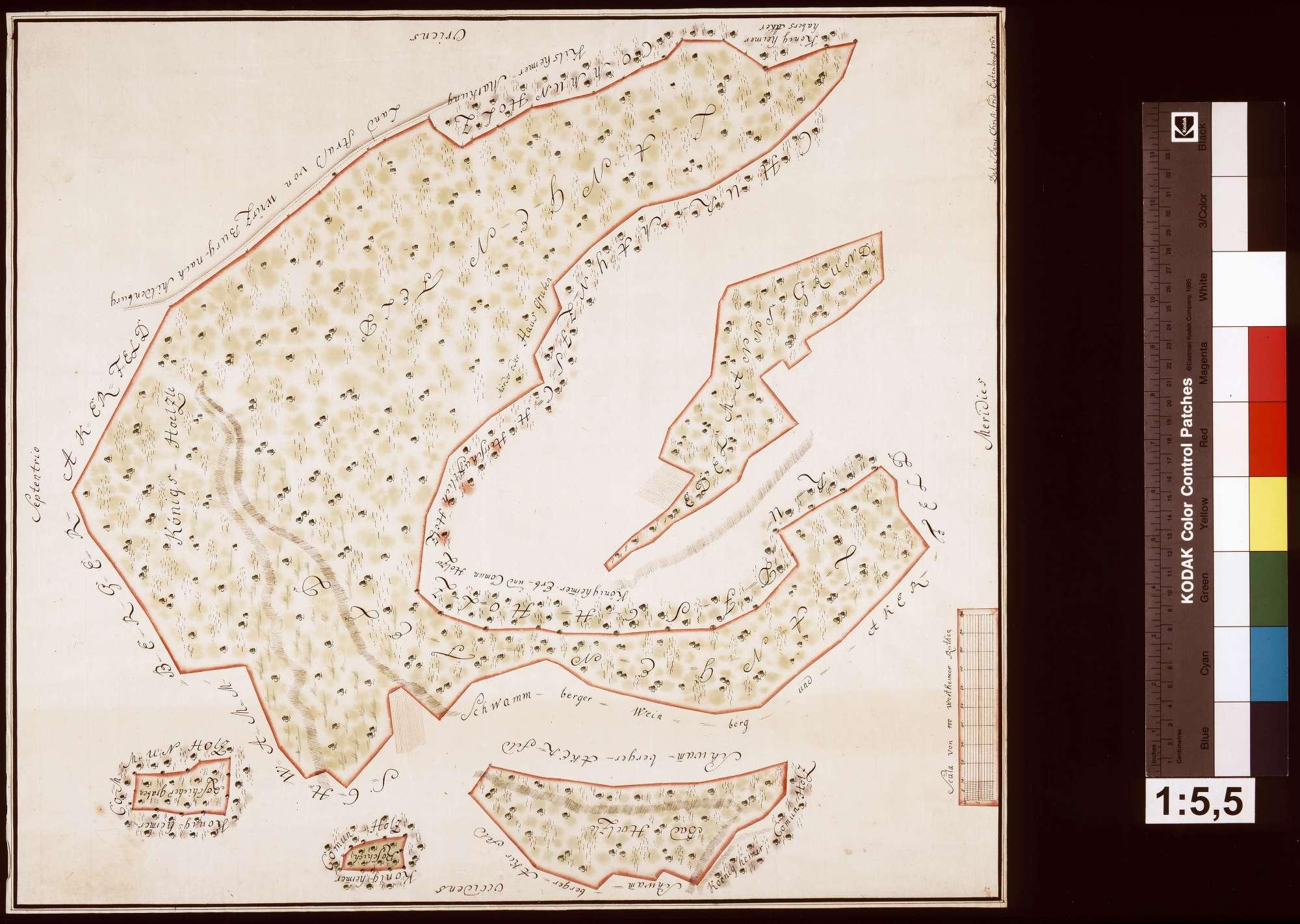 Gemeinherrschaftliche Waldung zu Königheim, Bild 1