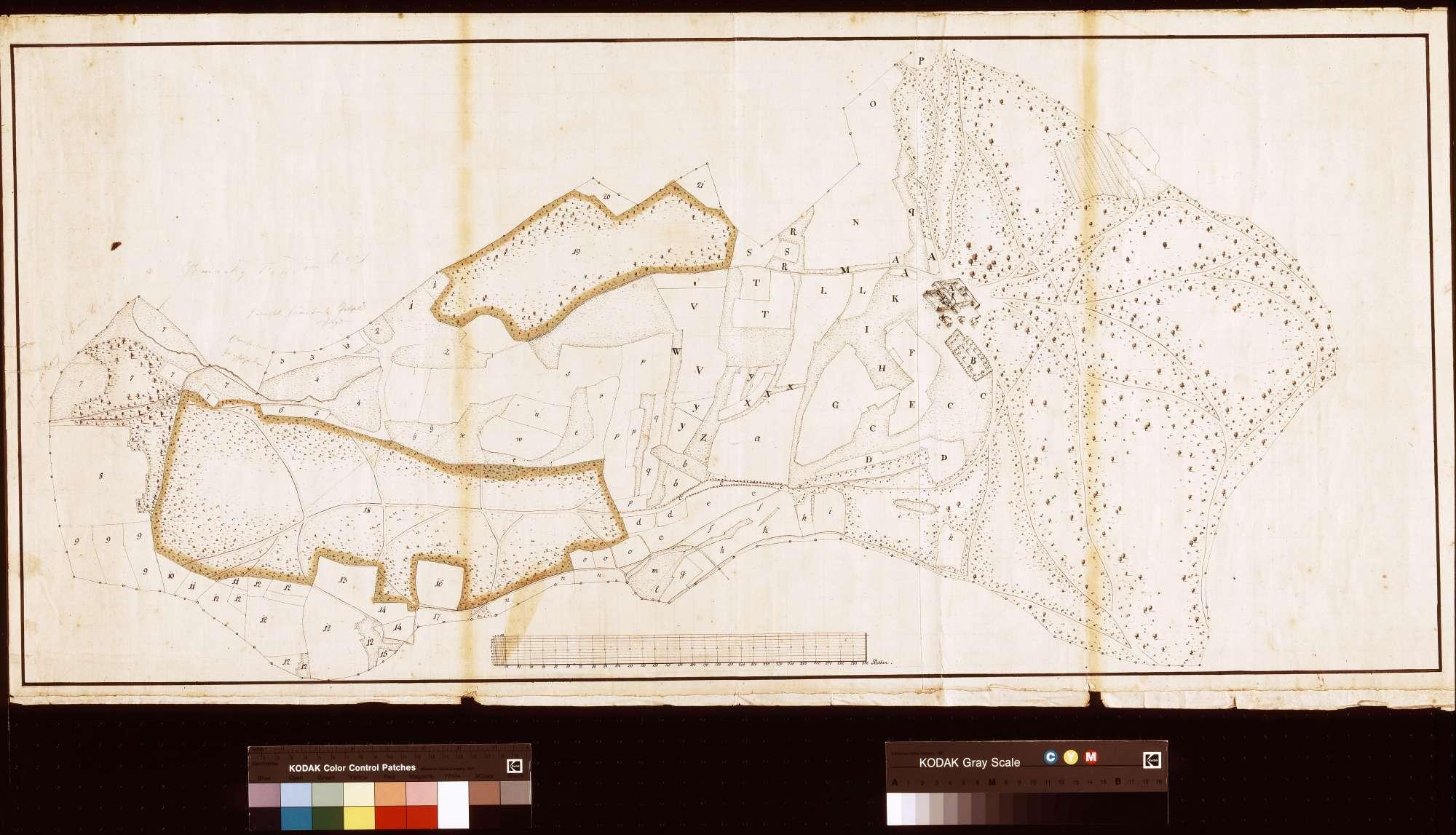 [Vermessung zweier Waldstücke auf Dürrhöfer Gemarkung] (Inselkarte), Bild 1