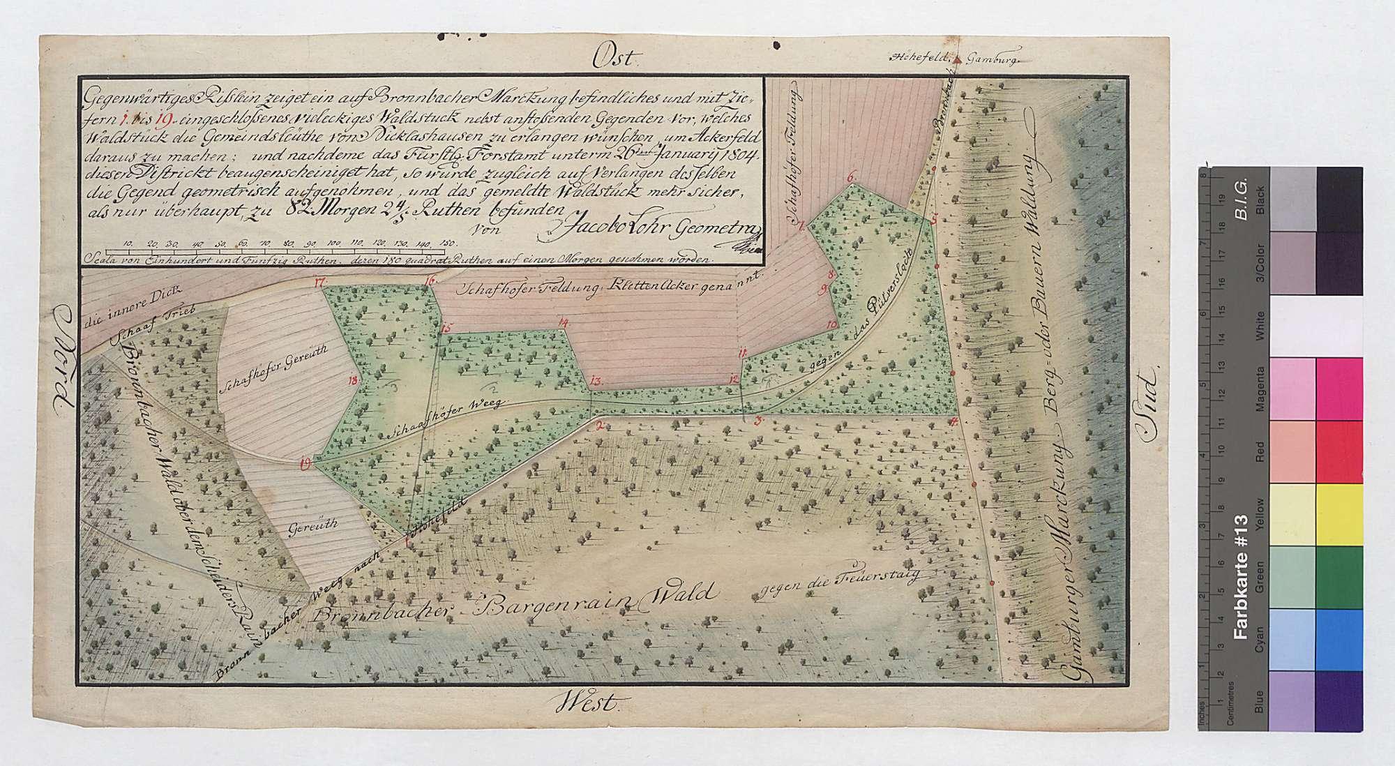 Waldstück am Bargenrain auf Bronnbacher Gemarkung, Bild 1