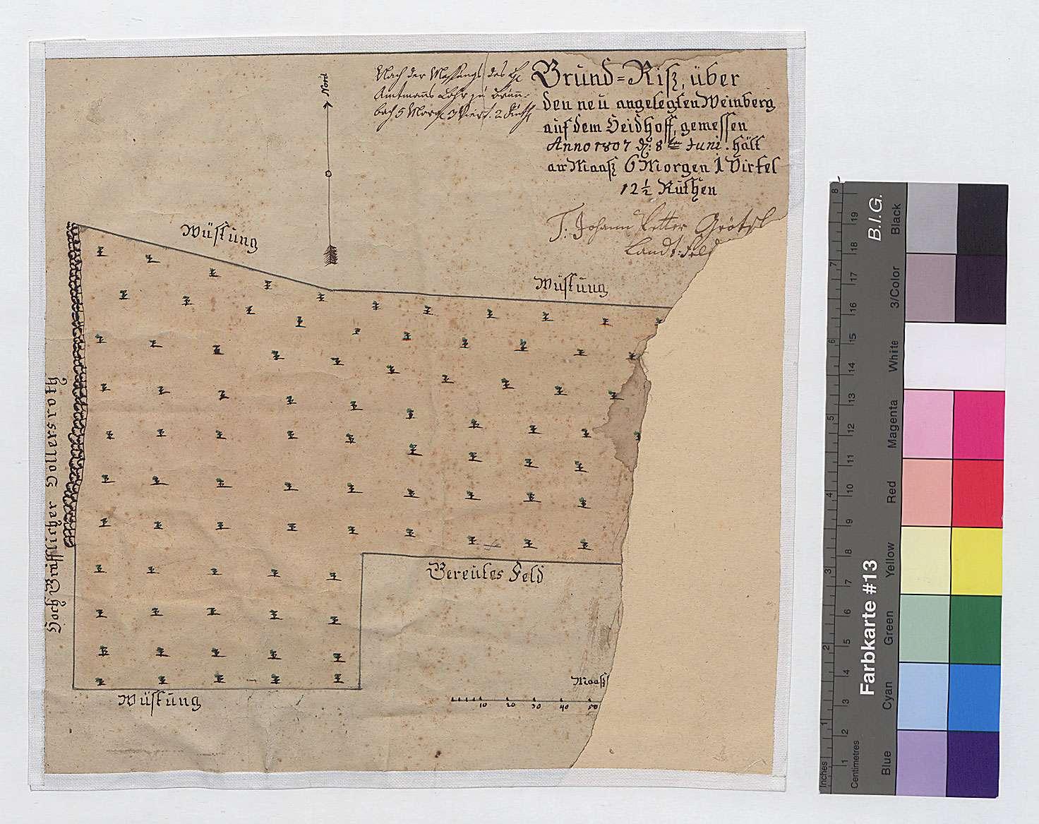 Grundriss über den neu angelegten Weinberg auf dem Haidhof (Inselkarte), Bild 1