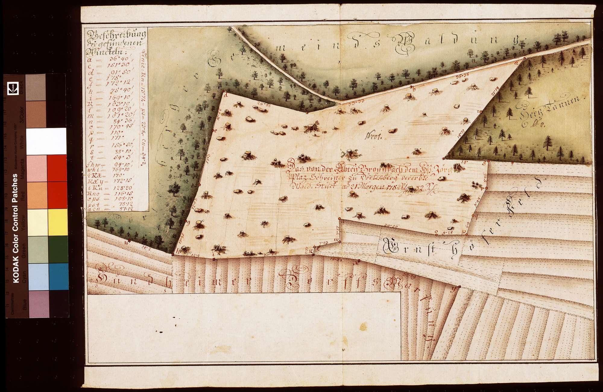 Das von der Abtei Bronnbach dem Hans Jörg Plaz, Schreiner zu Dörlesberg, vererbte Waldstück, Bild 1